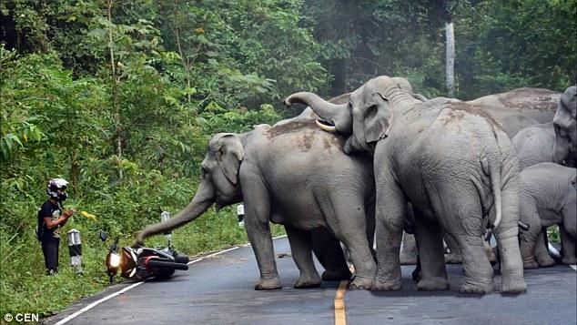 el hombre que pedia perdon a los elefantes por hacer mucho ruido 3