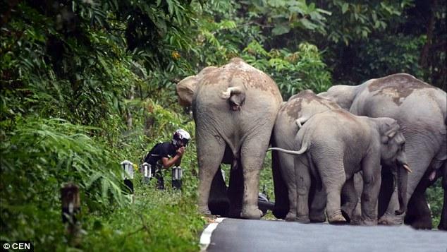 el hombre que pedía perdon a los elefantes por hacer mucho ruido 4
