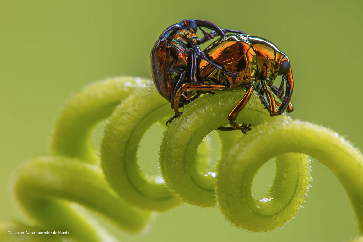 fotografia invertebrados 3