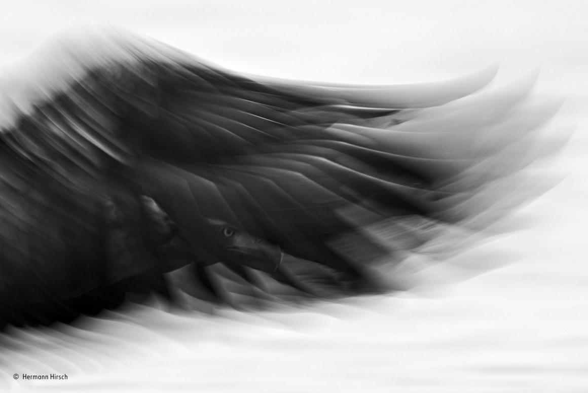 fotos blanco y negro 1