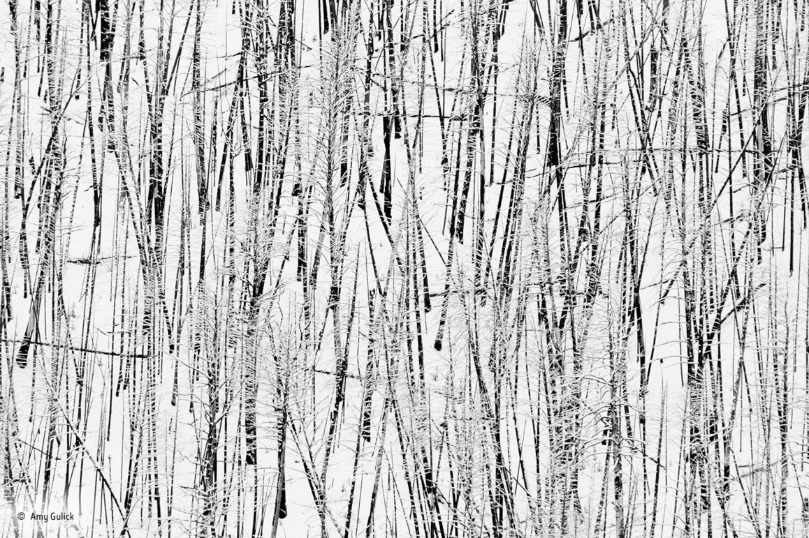 fotos blanco y negro 2