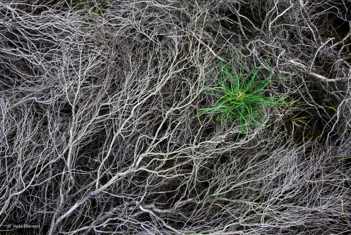 fotos plantas buenas 4