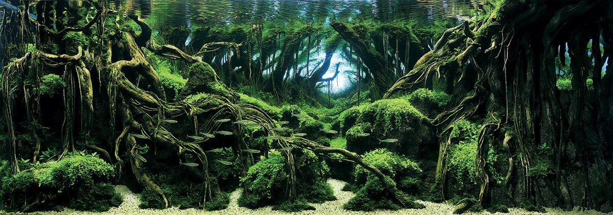iaplc aquascaping jardines submarinos en acuarios 1