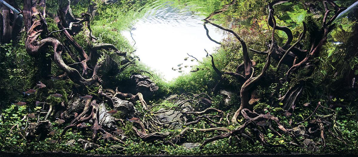iaplc aquascaping jardines submarinos en acuarios 12