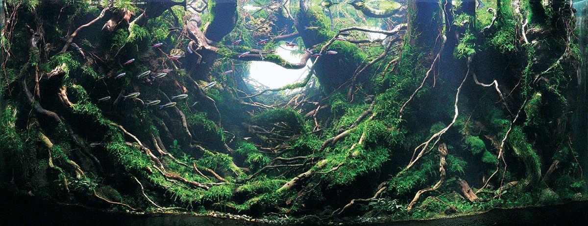 iaplc aquascaping jardines submarinos en acuarios 4