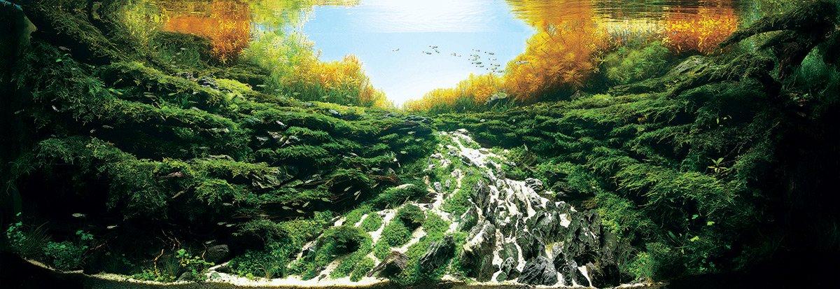 iaplc aquascaping jardines submarinos en acuarios 6