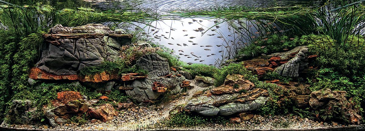 iaplc aquascaping jardines submarinos en acuarios 8