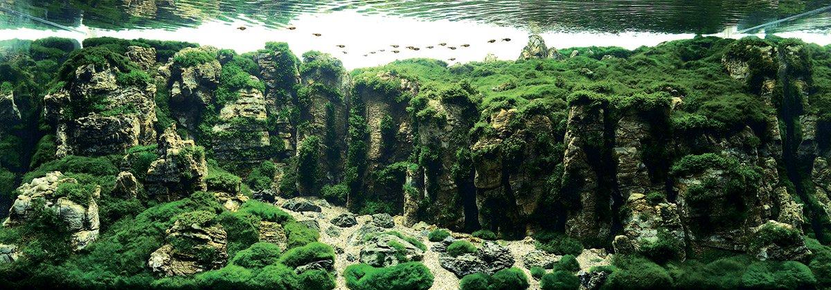 iaplc aquascaping jardines submarinos en acuarios 9