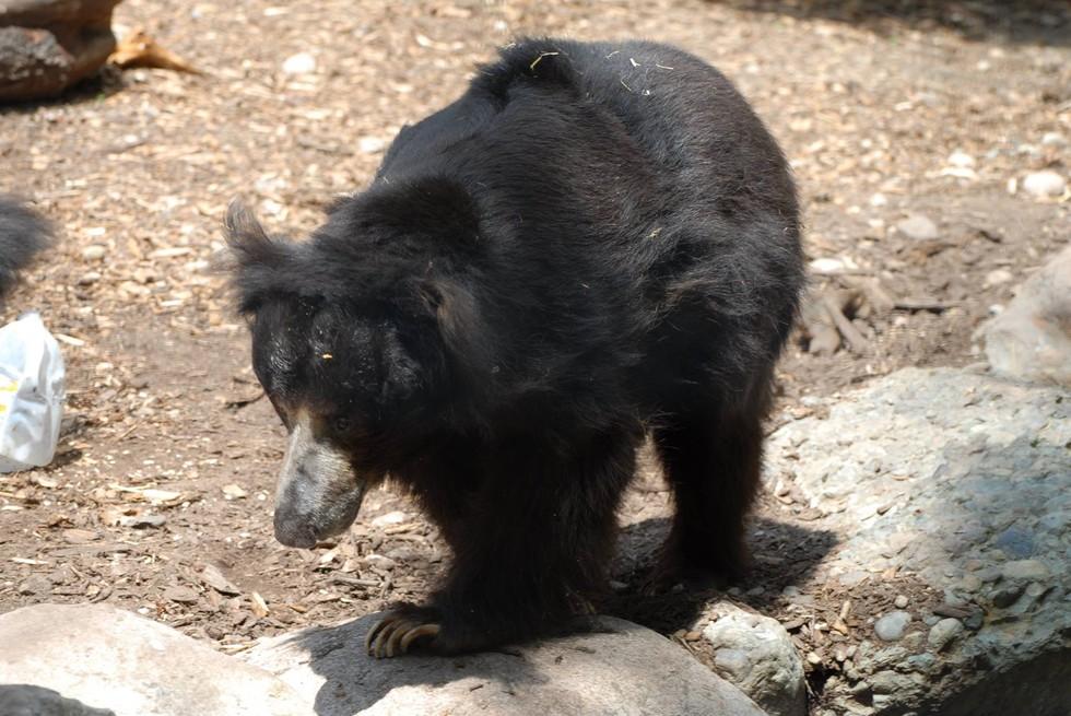 oso deprimido
