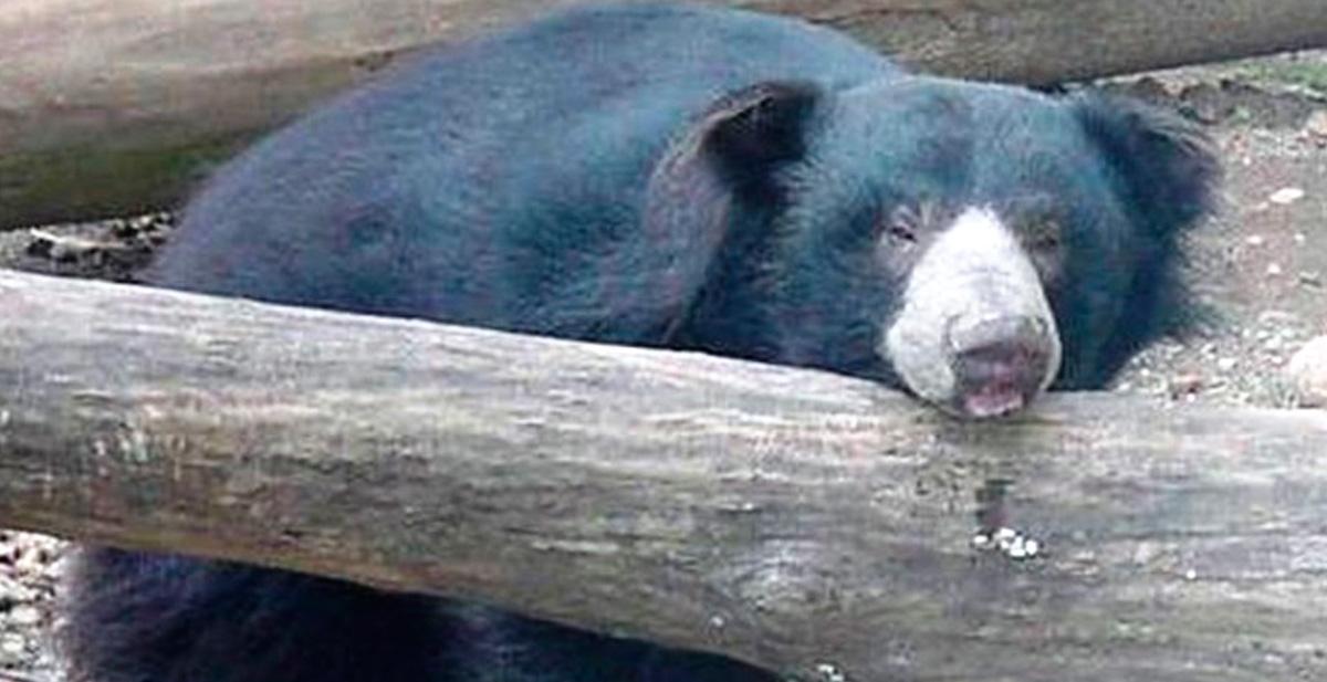 osos-muere-depresion