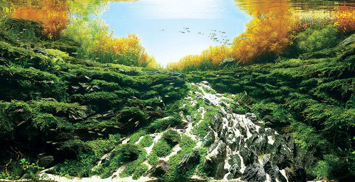 paisaje-acuario
