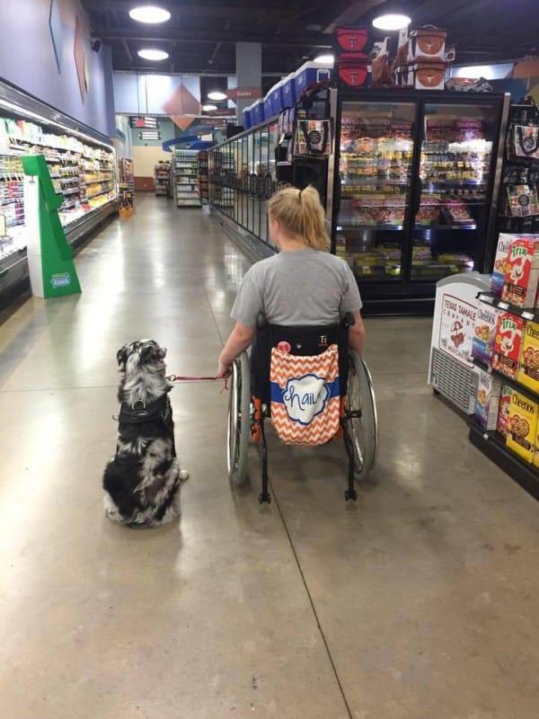 perro de asistencia 1