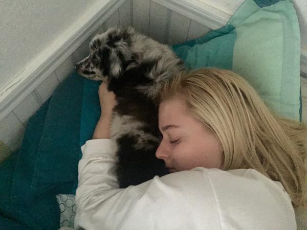perro de asistencia 3