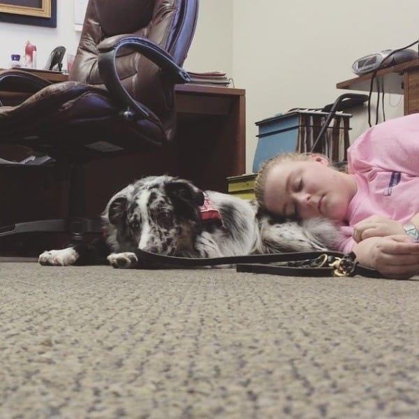 perro de asistencia 8