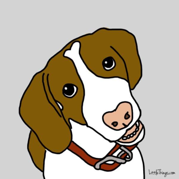 perros demostrando amor 1