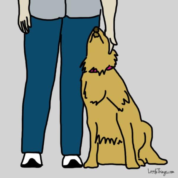 perros demostrando amor 3