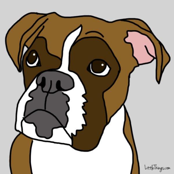 perros demostrando amor 5
