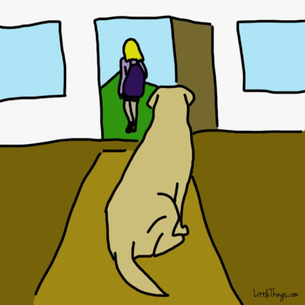 perros demostrando amor 6