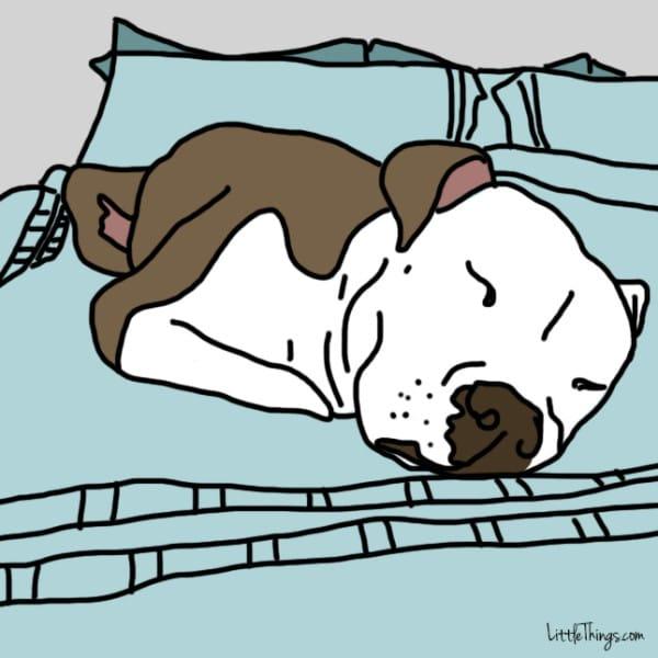 perros demostrando amor 8
