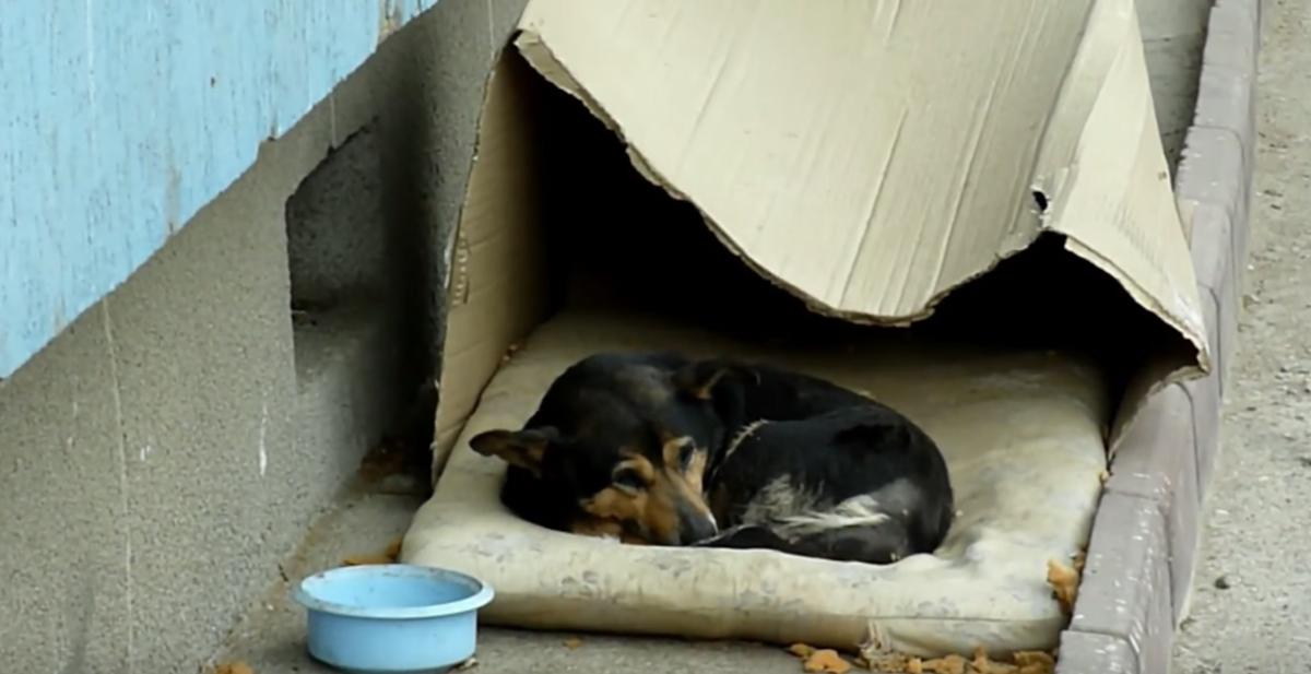 rescate de buzu el perro abandonado callejero