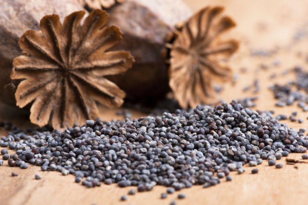 semillas de amapolas