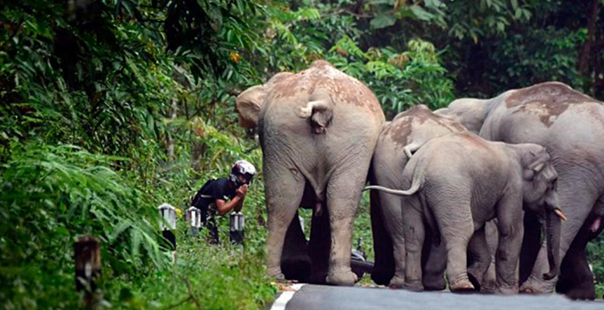 un joven se disculpa con los elefantes en tailandia por haber hecho mucho ruido con su moto