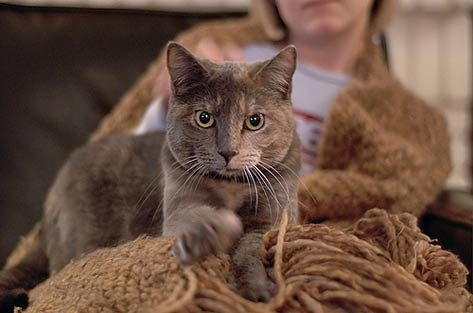 10 muestras de amor felino en los gatos 1