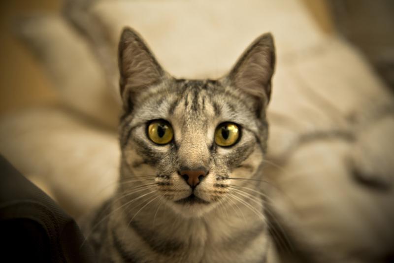 10 muestras de amor felino en los gatos 4