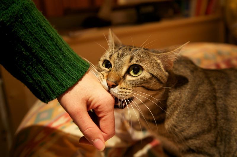 10 muestras de amor felino en los gatos 7