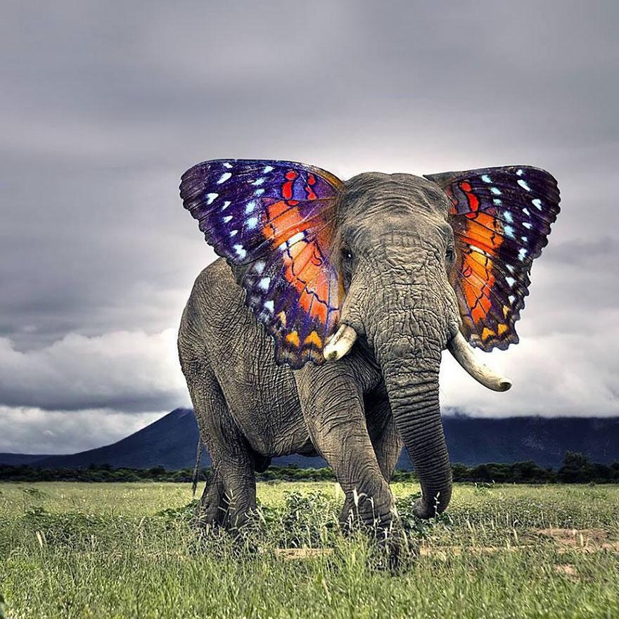 animales creados artificialmente con photoshop 1