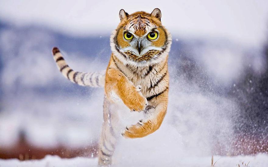 animales creados artificialmente con photoshop 14
