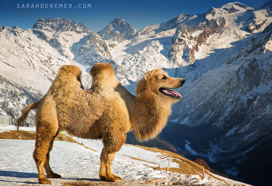 animales creados artificialmente con photoshop 15