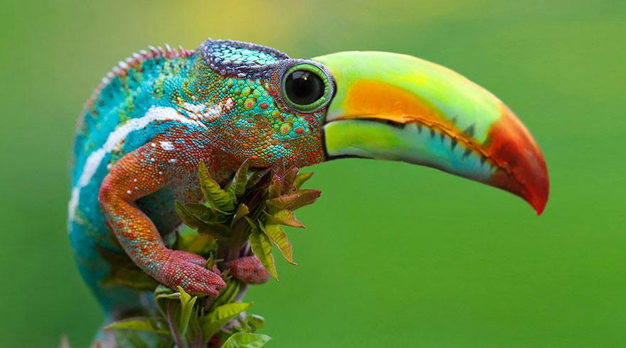 animales creados artificialmente con photoshop 16