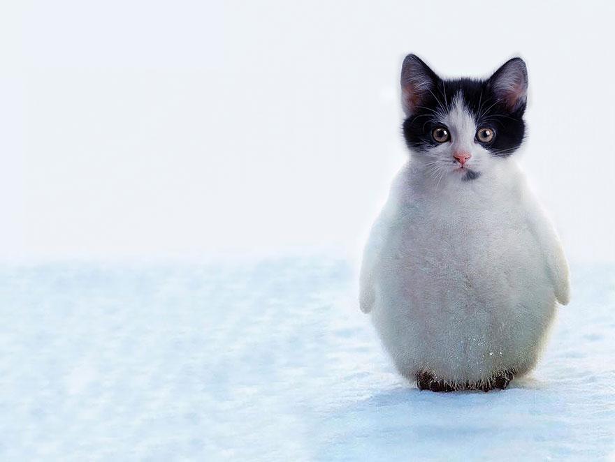 animales creados artificialmente con photoshop 2