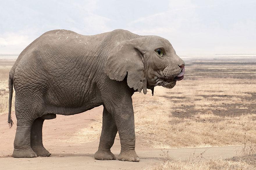 animales creados artificialmente con photoshop 20