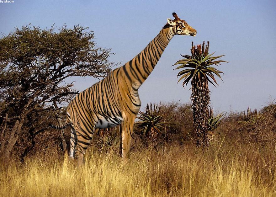 animales creados artificialmente con photoshop 22