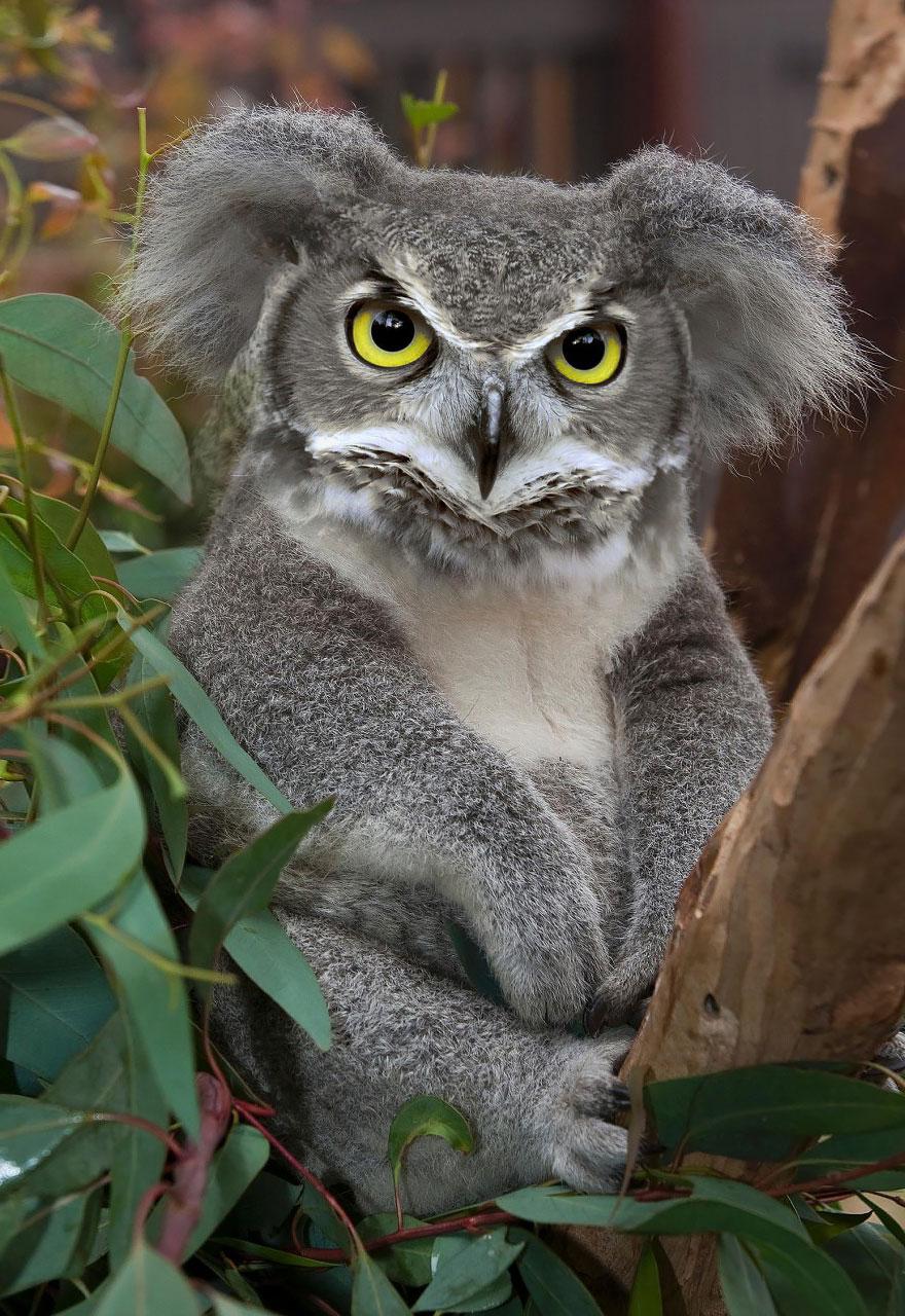 animales creados artificialmente con photoshop 3