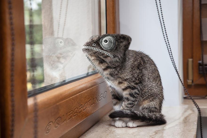 animales creados artificialmente con photoshop 4