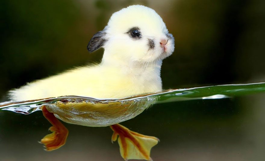 animales creados artificialmente con photoshop 5