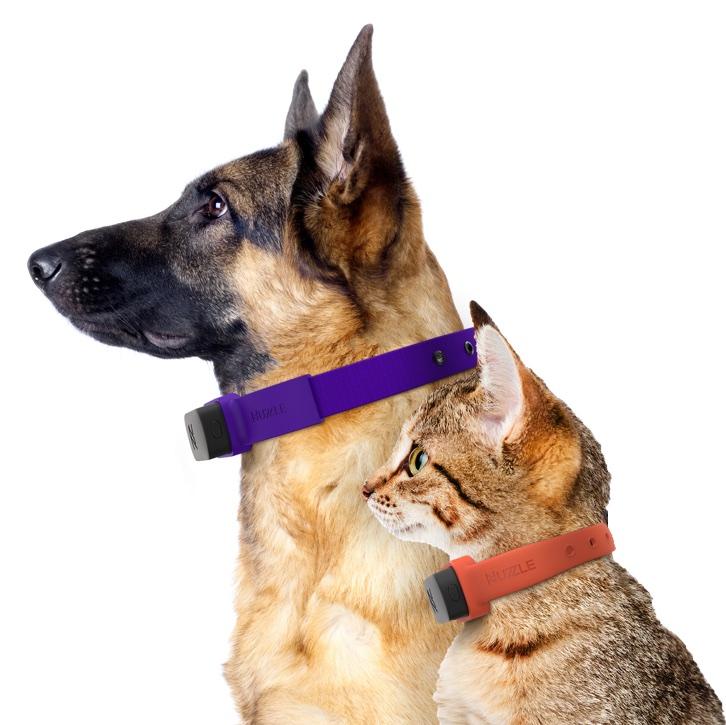 collar gps para animales