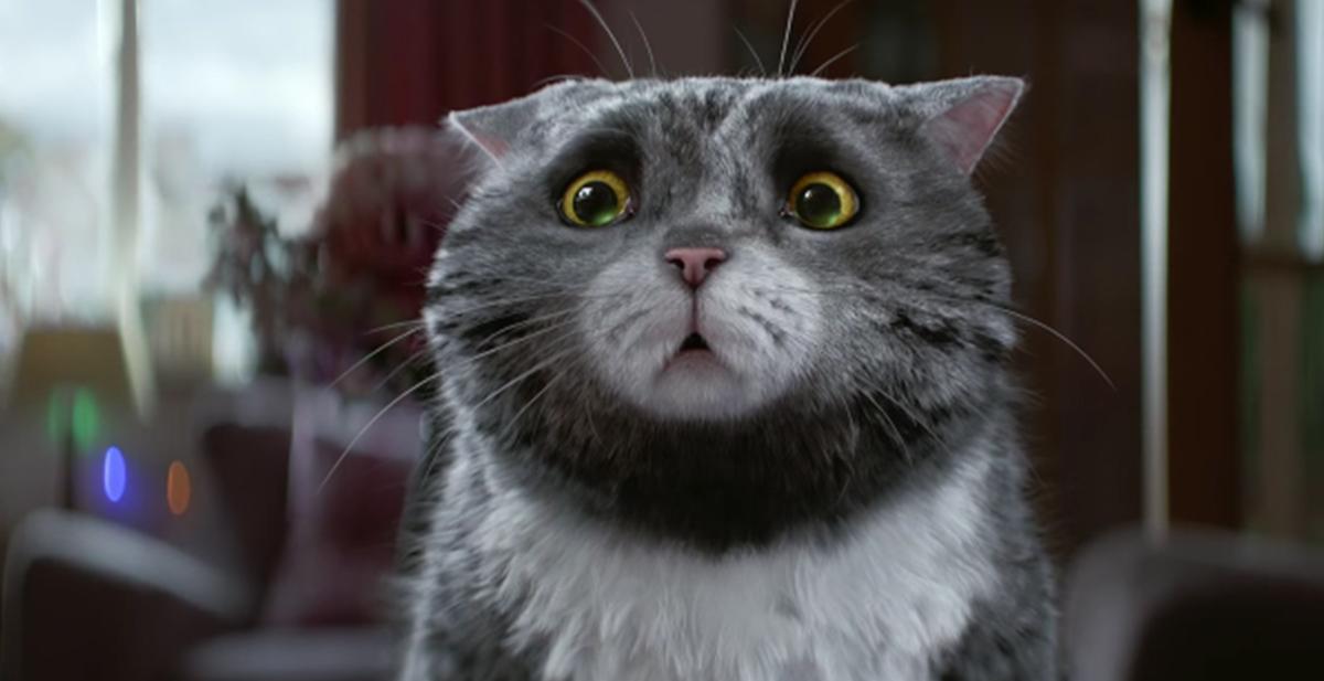 ¿Cómo estas hoy? en imagenes. El-anuncio-de-navidad-protagonizado-por-un-gato-1-1