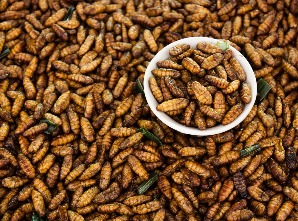 gusanos fritos de tailandia