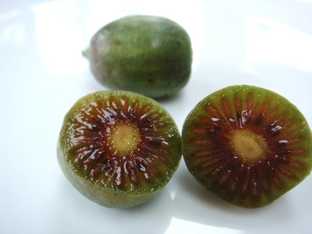 kiwi-chino
