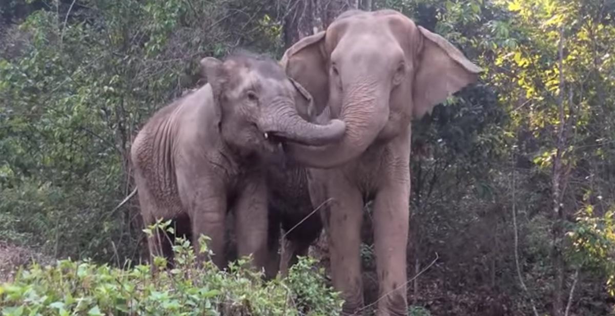 Madre e hija juntas de nuevo