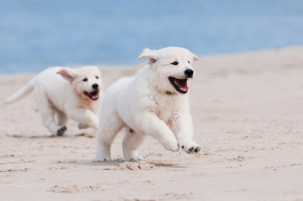 perro playa 1