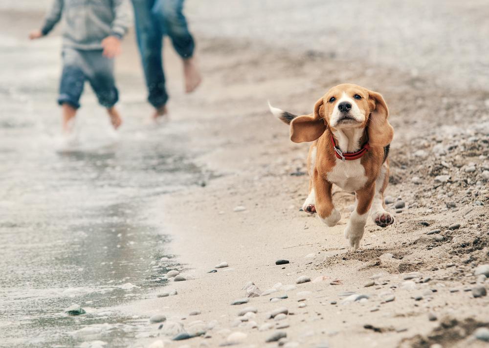 perro playa 2