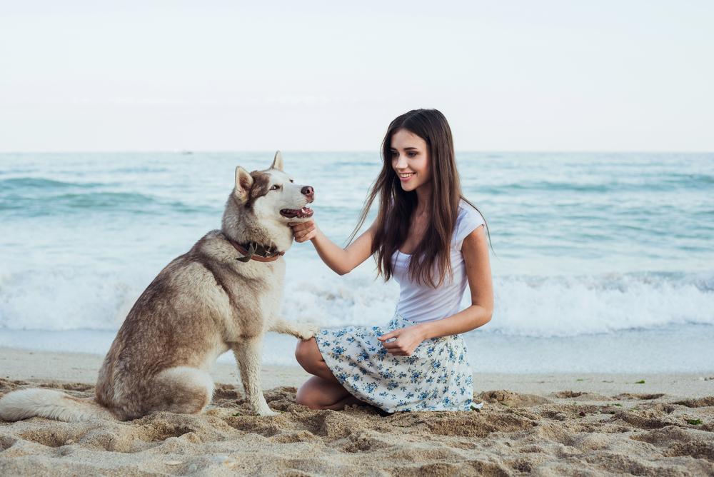 perro playa 3