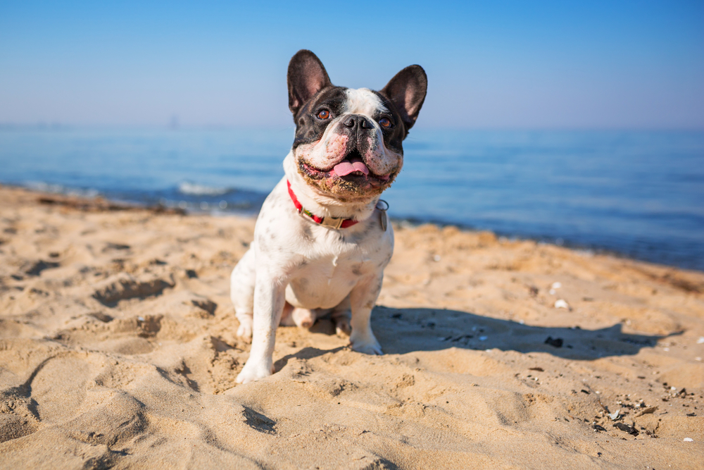 perro playa 5