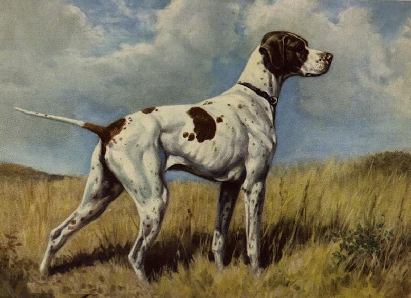 perros_extintos_7