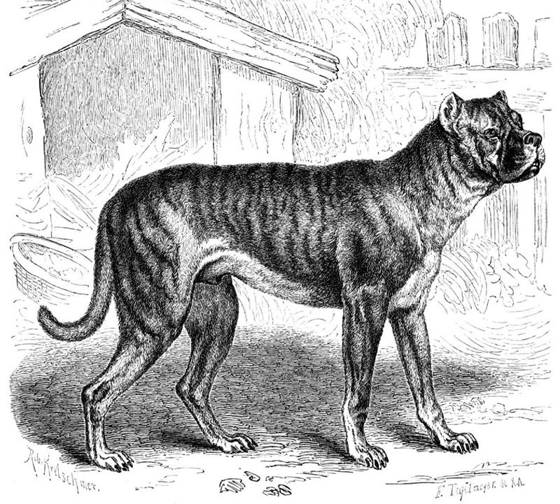 perros_extintos_9
